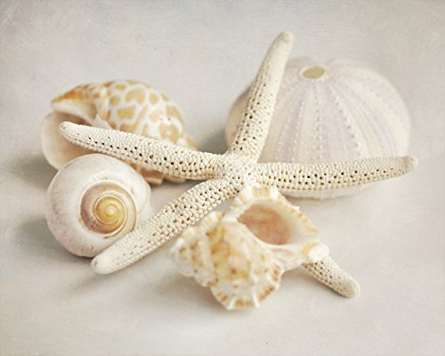 Seashell Decor, Shell Photographic Print, Neutral Wall Art, Shabby Chic Beach Decor, Pale Beige Grey Tan Brown Picture, Beach Bathroom Wall Art, Coastal Decor from 5x7 to 24x30