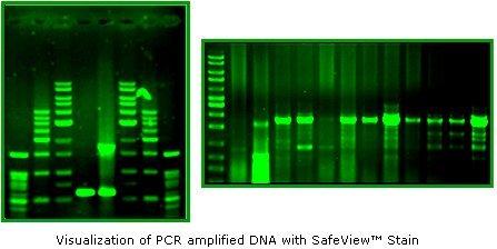 - SafeViewTM Classic Nucleic Acid Stain