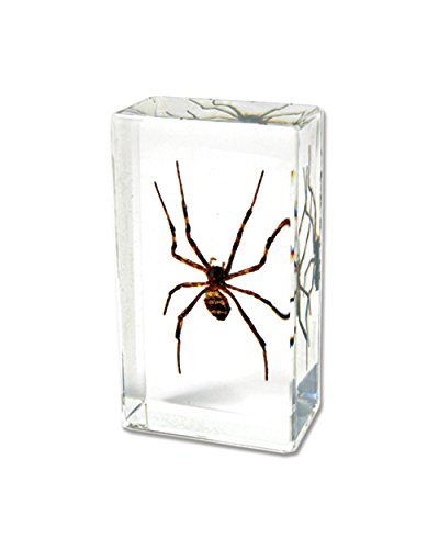 WGI Real Spider Paperweight (Paperweight Spider)