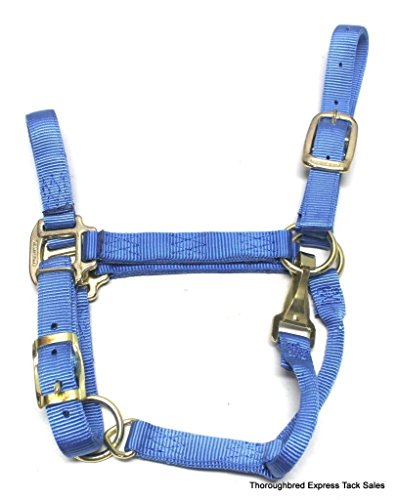 Hamilton 5-8 1-Inch Adjustable Quality Horse Halter with Small Snap for Horses 500 to 800-Pound, Berry Blue