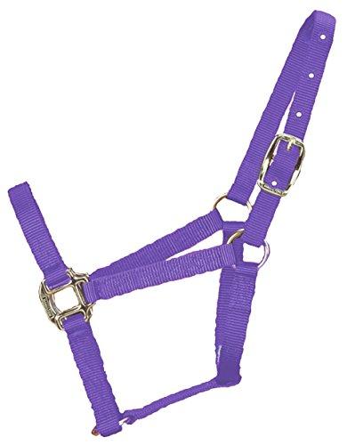 Hamilton 3/4-Inch Nylon Quality Horse Halter, Pony or Average Miniature Donkey, (Hamilton Rope Halter)