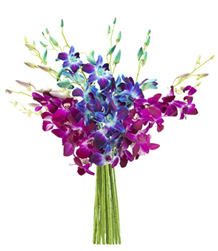 KaBloom Midnight in the Tropics Bouquet of Blue and Purple Orchids from ()