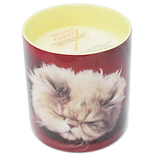 (Kitten perfumed candle - Maurizio Cattelan for Toilet Paper)