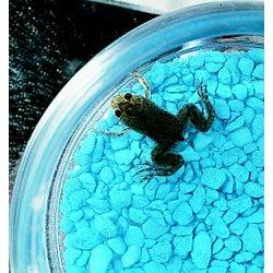 Three Rivers Amphibian Grow-A-Frog Kit