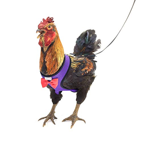 Yesito Chicken Harness Hen Size With 6ft Matching Leash - Adjustable, Resilient, Comfortable, Breathable, Medium, Suitable for Chicken Weighing about 4.4 Pound,Purple