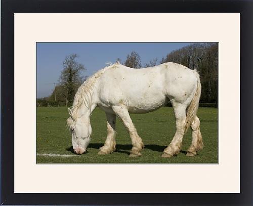 Framed Artwork of Horse - Boulonnais / White Marble Horse - grazing