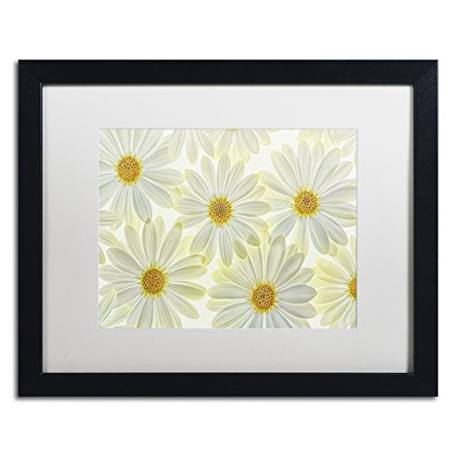 Daisy Flowers by Cora Niele Artwork in White Matte with Black Frame, 16 x 20""