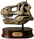Tyrannosaurus rex Skull Model - Large