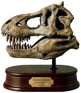 Tyrannosaurus Rex Skull Model 1/10 Scale (Tyrannosaurus Rex Skull)
