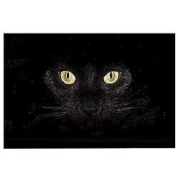 Chezmax Non Slip Doormat Coral Fleece Indoor Outdoor Kitchen Floor Rug Front Door Mat Funny Flannel Carpet Black Cat 23 62 X 15 74
