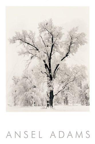 Oak Tree Snowstorm by Ansel Adams 24x36 Black & White Landsc