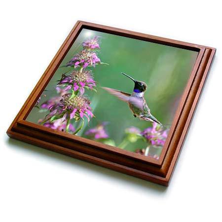 - 3dRose Danita Delimont - Hummingbirds - Black-chinned Hummingbird male at bee balm, Texas, USA.  - 8x8 Trivet with 6x6 ceramic tile (trv_315064_1)