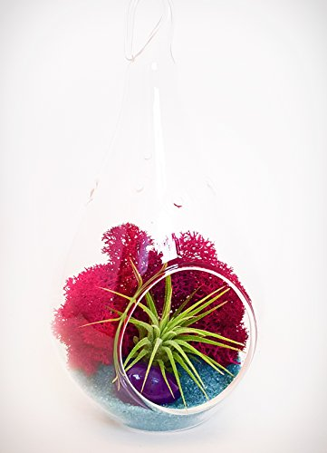 Bliss Gardens Mini Air Plant Terrarium Kit with 3″ Glass Globe or 5″ Teardop, Fuchsia Moss, Turquoise Sand and Purple Agate
