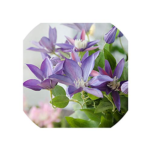 (Artificial Flowers Practical Three Branches Clematis Florida Thunb Vivid Plant Home and Garden Decoration 69Cm Gift,Violet)