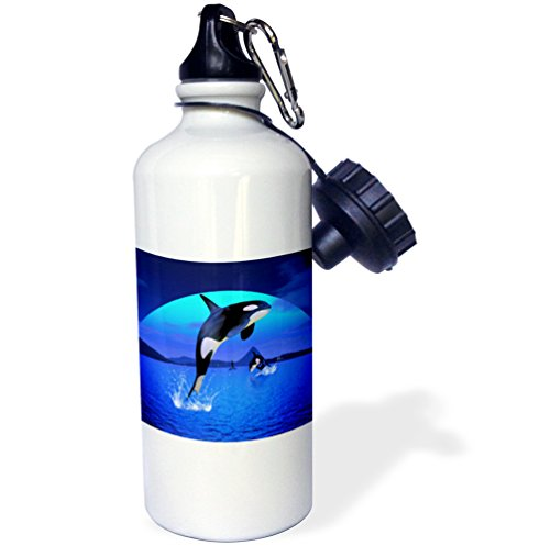 3dRose wb_181696_1'' A orca whale enjoy the freedom, for animal and nature lovers Sports Water Bottle, 21 oz, Multicolor by 3dRose