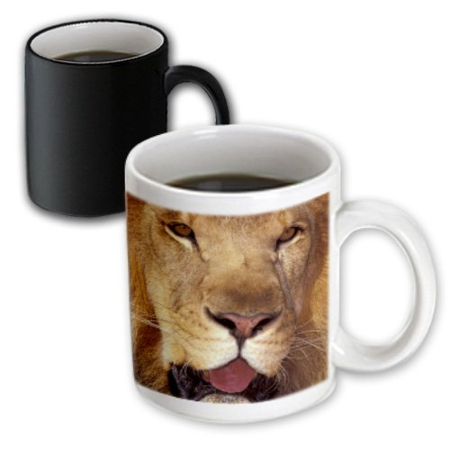 3dRose Africa, Male African Lion, Panthera Leo, Magic Transforming Mug, - Lion African Panthera Leo