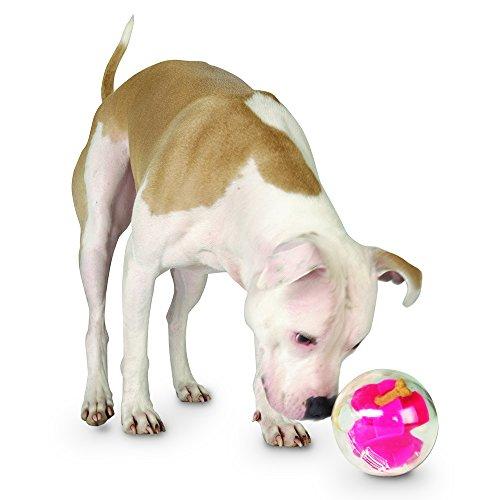 Planet Dog Mazee free shipping