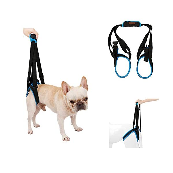 RC GearPro Dog Lift Harness for Back Legs, Pet Support Sling Help Weak Legs Stand Up Injured Disabled Arthritis ACL… Click on image for further info.
