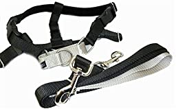 Freedom No Pull Velvet Lined Dog Harness and Leash Training Package Black Large by 2 Hounds