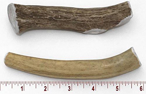 5-7'' Medium Deer Antler Dog Chew - 2 ct by Perfect Pet Chews (Image #1)
