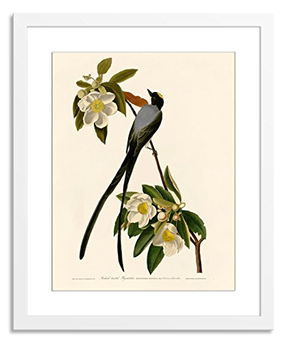 John Audubon Fork James (Gallery Direct V03686-12x16-PF-F0175-ML002 Fork-Tailed Flycatcher by John James Audubon Artwork on Paper with White, Clean and Simple Frame, 22