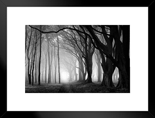 Poster Foundry Fog in A Beech Tree Grove Black and White Photo Art Print Matted Framed Wall Art 26x20 inch ()
