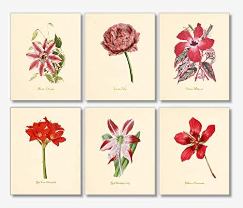 (Red Flower Wall Art - Vintage Floral Decor (Set of 6) - 8x10 - Unframed - Botanical Prints)