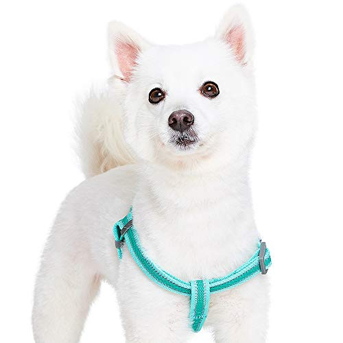 Blueberry Pet 20+ Colors Classic Solid Color Harnesses or Leashes