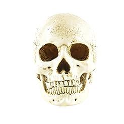 ENNAS 1:1 Resin Skull Head Model Simulat...