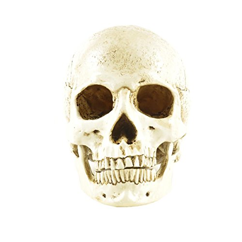 ENNAS 1:1 Resin Skull Head Model Simulation Skeleton Head Medical Skull Art Copy for Halloween Decor