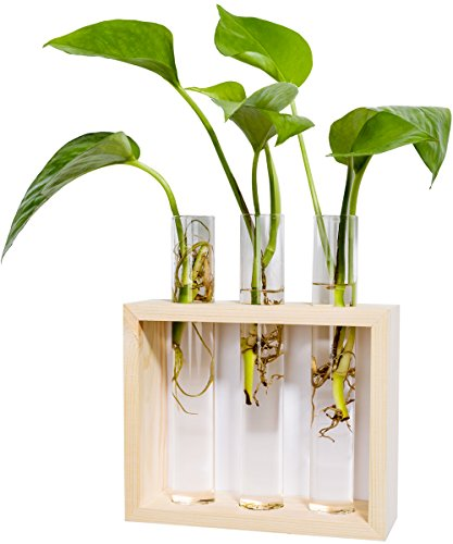 Mkono Wall Hanging Planter Test Tube Flower Bud Vase with Wood Stand by Mkono