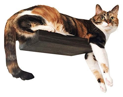 CatastrophiCreations  Solid Wood Cat Shelf  Handcrafted  Wall-Mounted Cat Furniture,  Onyx, 12