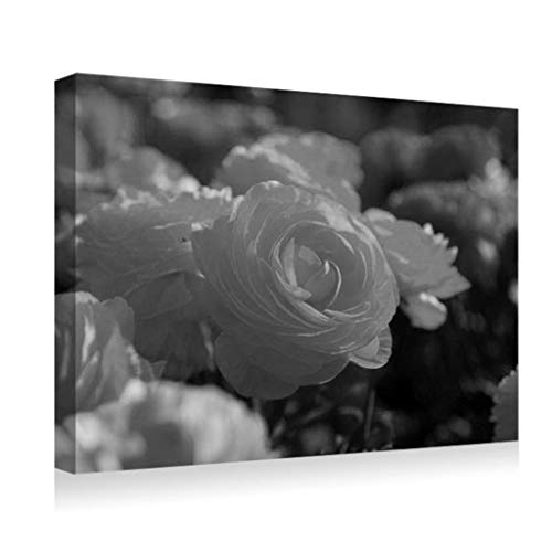 SHADENOV Canvas Prints Wall Art - Roses Flowers Garden Miscellaneous Loose - Modern Home Deoration Wall Decor Printing Wrapped Stretched Canvas Art Ready to Hang 24x16 Inches Black and White