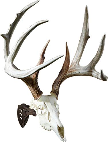 (Skull Hooker Little Hooker European Trophy Mount - Perfect Kit for Hanging and Mounting Taxidermy Deer Antlers and Other Skulls for Display – Robust)