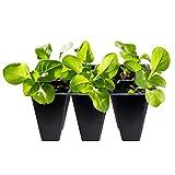 Gardzen Black Seed Starter Trays, Reusable Plant