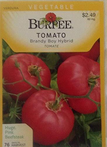 Plantree Burpee Brandy Boy Hybrid Tomato, 60Mg, 2 for 1 Packets