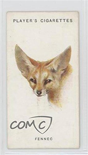 The Fennec Ungraded COMC Good to VG-EX (Trading Card) 1931 Player's Wild Animals' Heads by Arthur Wardle - [Base] #22 from Unknown