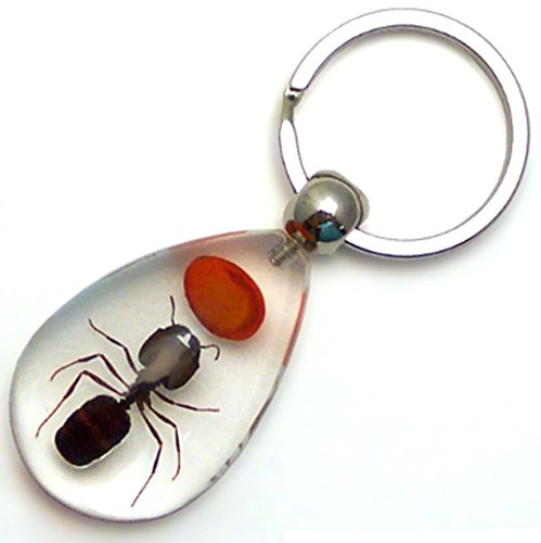 Real Insect Key Chain - Red Lucky Bean & Ant