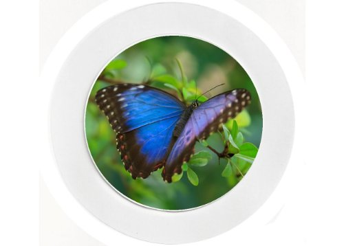 Reuseable Blue Butterfly Car Tax Disc Holder