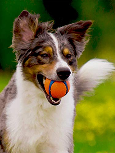 Buy outdoor dog toys
