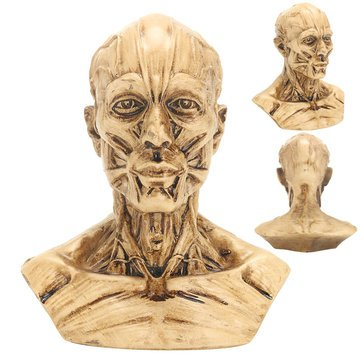 Exemplar - 10cm Human Anatomical Anatomy Skull Head Muscle Bone Medical Model Decor - Theoretical Account Empirical Manikin Mannikin Exemplary Mock Trial Poser Fashion - 1PCs (Unknown Artist Cat)
