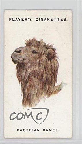 The Bactrian Camel (Trading Card) 1931 Player's Wild Animals' Heads by Arthur Wardle - [Base] #11 from Unknown