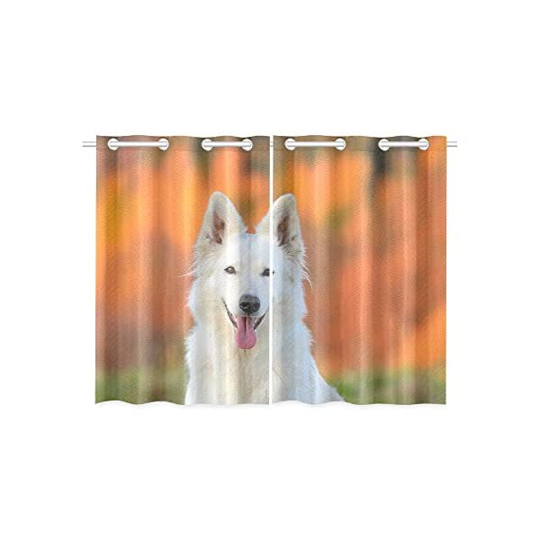 AIKENING White Swiss Shepherd Dog Autumn Kitchen Curtains Window Curtain Tiers for Café, Bath, Laundry, Living Room Bedroom 26 X 39 Inch 2 Pieces 3