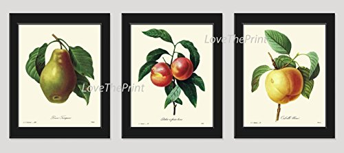 Pear Tree Photo (Botanical Fruit Print Set of 3 Antique Redoute Beautiful Pear Peach Plant Tree Branch Home Room Decor Wall Art Unframed)