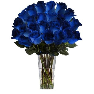 VALENTINES DAY FLOWERS ROSES BLUE ULTIMATE BOUQUET 24 STEM IN CLEAR VASE