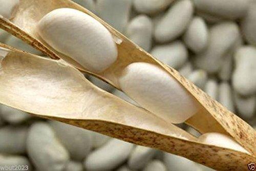 Haricot Haricot Tarbais 50 graines Bean traditionnel utilis/é en France pour Cassoulet