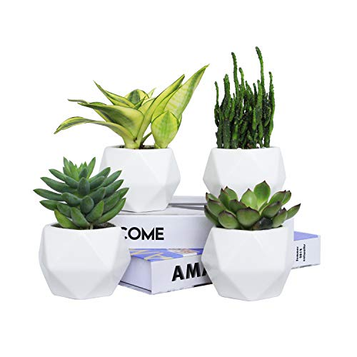 Plant Pot, Rosoli 4pcs Ceramics Indoor Planter Garden Pots for Succulents, African Violets, Cactus, Herbs - 3.5 Inch Flower Pots with Drainage Hole and Waterproof Tray (White). (Best Pots Plant Price)
