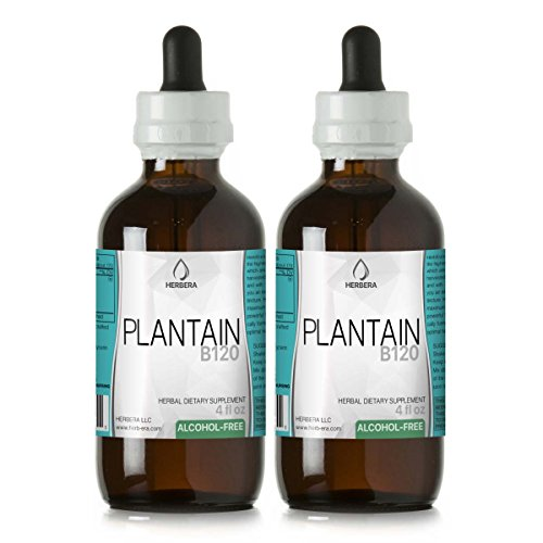 Plantain B120 (2pcs) Alcohol-Free Herbal Extract Tincture, Super-Concentrated Organic Plantain (Plantago Major) Dried Leaf (2x4 fl oz) -