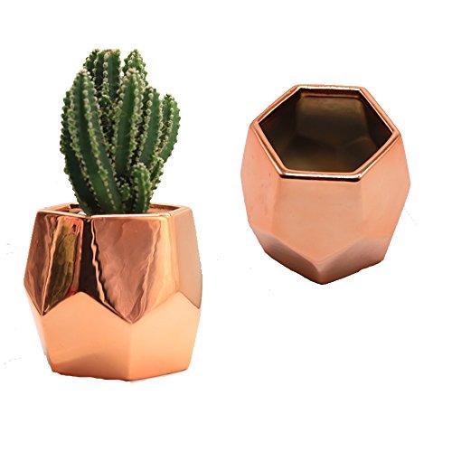 Purzest Cacti Pots,Ceramic Succulent Planter Modern Home Decor Cactus Plant Pot, 3 inch Copper Color 2 Set by Purzest