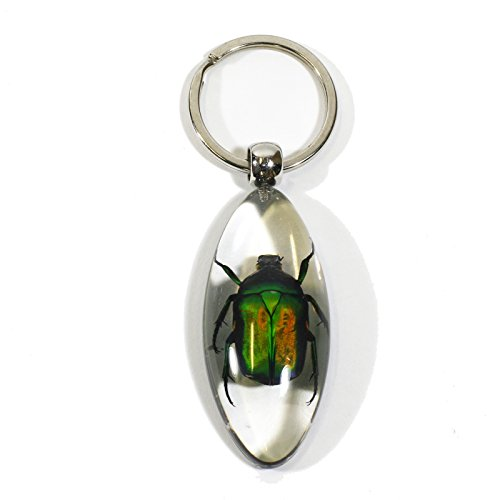 REALBUG Chafer Beetle Oval Key Chain